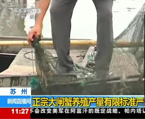 中央三套:2014年阳澄湖大闸蟹养殖产量受限