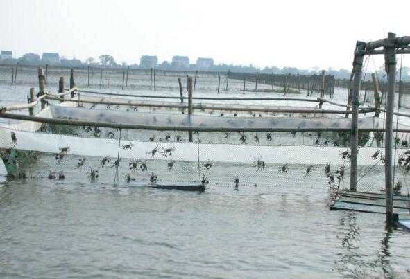 大闸蟹养殖地