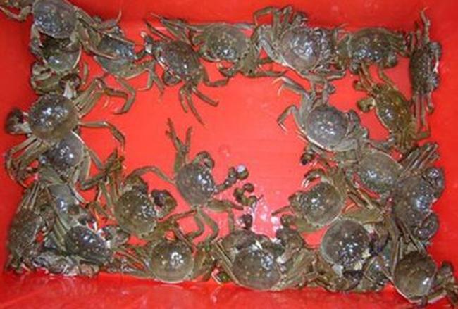 大闸蟹保存方法