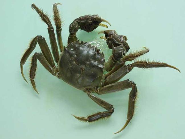 大闸蟹病害防治方法