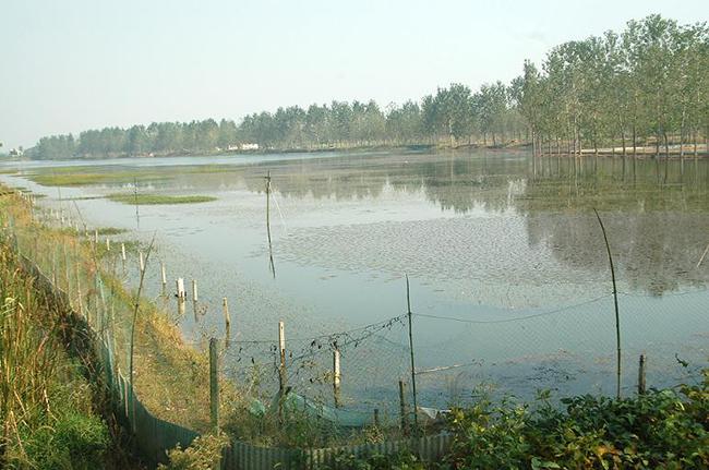 大闸蟹池塘养殖