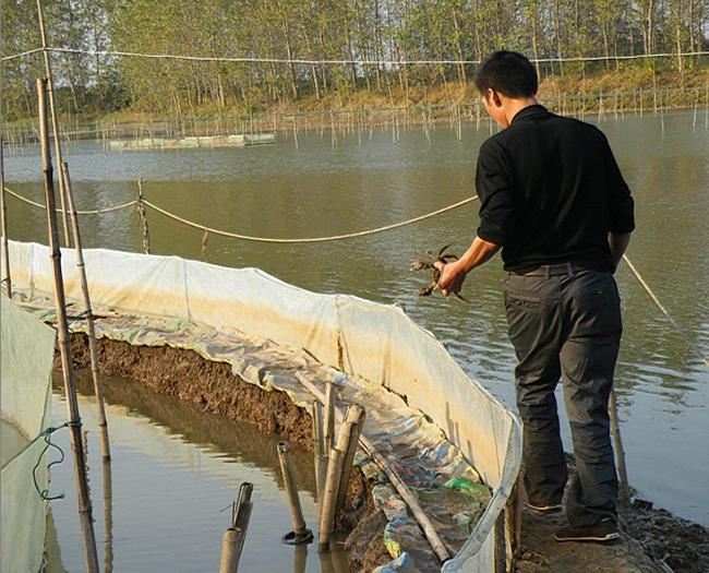 大闸蟹池塘养殖管理措施