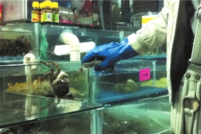 大闸蟹蟹池增氧设施安装