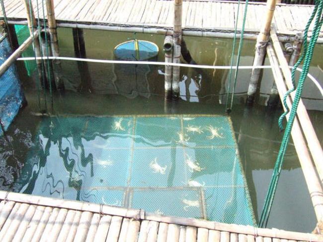 大闸蟹池塘养殖防逃技术