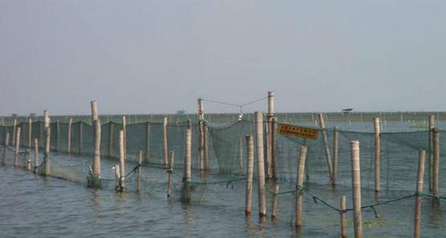 大闸蟹生态养殖
