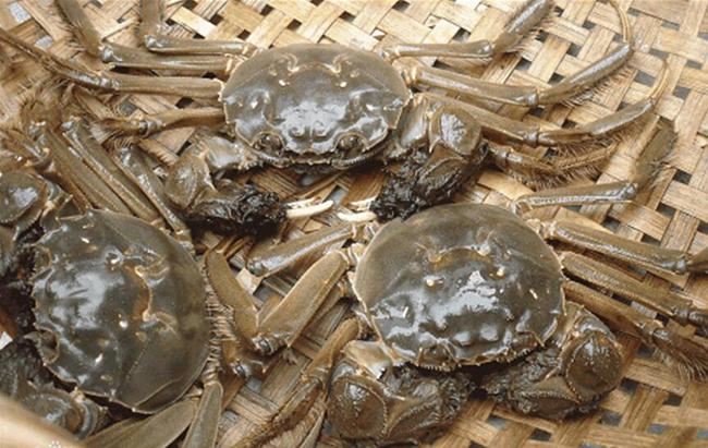 大闸蟹消化不良图
