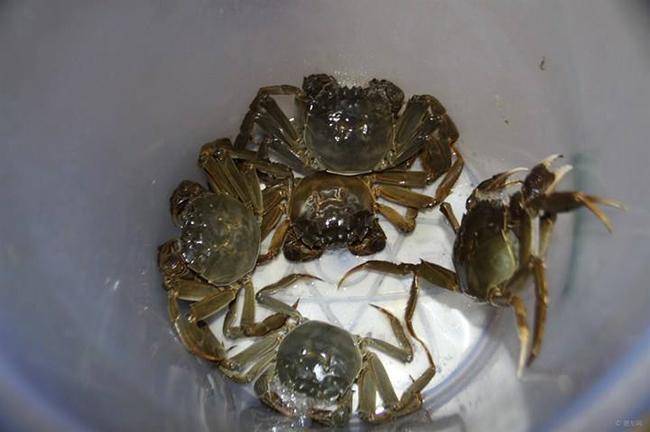 大闸蟹装在水桶图