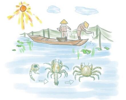 阳澄湖环境优美