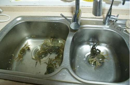 暂养池保存大闸蟹