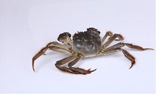 大闸蟹生活习性