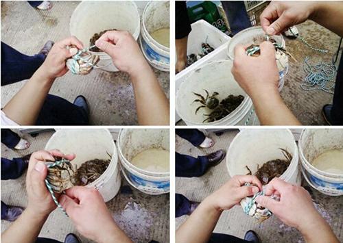 捕捞大闸蟹