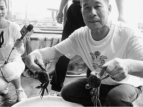 阳澄湖的蟹农为何不卖六月黄