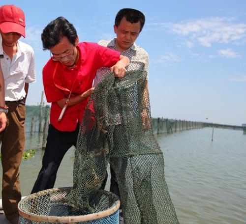 大闸蟹捕捞