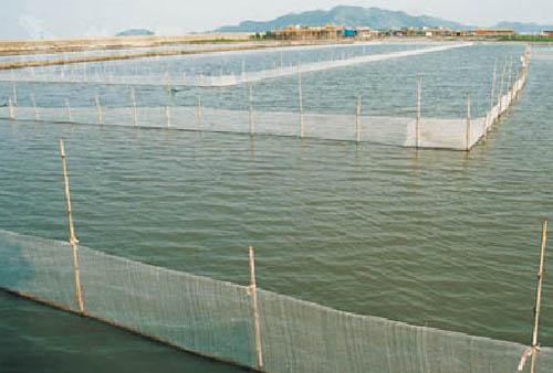 阳澄湖大闸蟹的养殖
