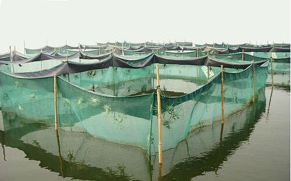 阳澄湖养殖水质