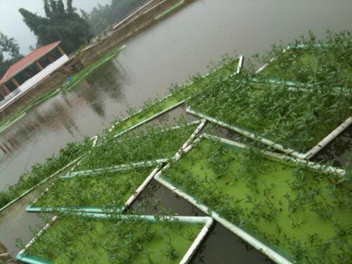 王氏阳澄湖