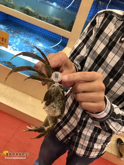 今年第一批大闸蟹到杭州啦,3万只一上午就被抢空了!
